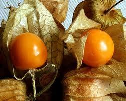 Sağlık! Altın Çilek Meyvesi Nedir? Nasıl Kullanılır? Faydaları Nelerdir?