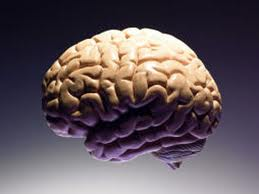 Beyin ve Bölümleri; Beynin Vücudumuzdaki Yeri ve Büyüklüğü