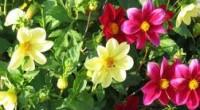 bitkilerde duyarlılık