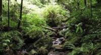 tropikal ormanlarda yaşam