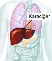 Karaciğer, Pankreas ve Safra Kesesi Bozuklukları Nedenleri ve Belirtileri