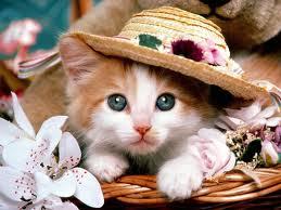 Kediler Nasıl Hayvanlardır? Kedi Türleri ve Özellikleri
