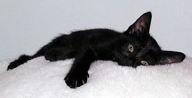 11.japonlar-siyah-kediler-uguru