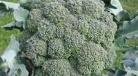 brokolibilgibirikimi