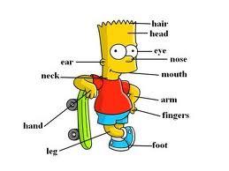 Vücudumuz Hangi Kısımlardan Oluşur ?